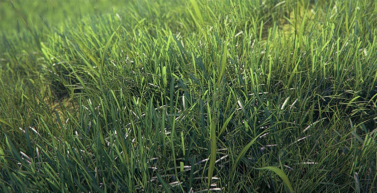 Using V-Ray For 3ds Max To Create A Real Grass Field